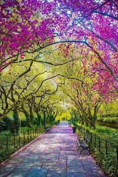 Central Park || New York, USA #photography Beauti Pathway, New York Central Park, Parks, Natur, Nyc, Place, Travel Idea