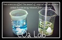 Lab freebie that teaches the cell processes such as photosynthesis, respiration and fermentation