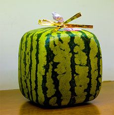 How To Grow a Square Watermelon
