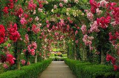 Garden path in bloom