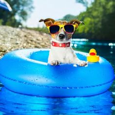 Must-have pet documents to bring on your vacation