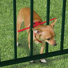 ....The Escape Preventing Dog Harness