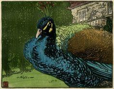 Allen Seaby - Peacock