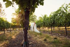 Tara & Michael on Borrowed & Blue. Photo Credit Trevor Dayley Photography #VandaFloral #summerwedding #intimatewedding #outdoorwedding #vineyard