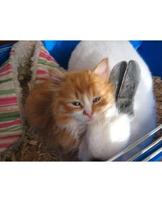 Kitten and bunny, cuddling for Easter