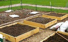 build rais, raised gardens, planting in raised beds, raised bed gardens, rais garden, cheap raised garden beds, rais bed, box garden, garden boxes