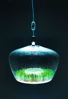 A Suspended Glass Greenhouse Lamp #sportsgirl