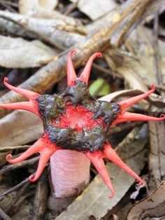 What Are Stinkhorns: Tips For Removing Stinkhorn Fungi