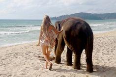 elephants... i love