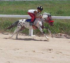 Its a mini jokey on a mini horse!