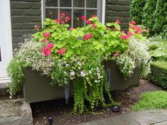 Beautiful Container Garden