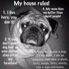 My (pugs) house rules