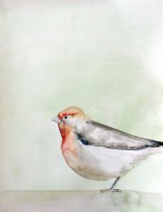 chubster bird