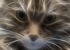 Electrifying kitty!