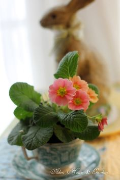 Spring Flowers in a Teacup