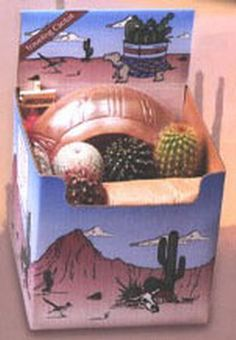 Cactus Planting Kit - This kit contain 4 cacti, a 5″ Southwestern designed ceramic planter, soil, decorative stones, and an Arizona sign. Everything you need for a small cactus desk garden. Now you can own a piece of the American Southwest! Desert Canyon Gifts presents a selection of Cactus Growing Kits. Most cactus planting kits come complete with cacti, the right type of soil, decorative pebbles, planter, and a unique Arizona sign.  $42.95