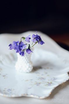 cute Violets