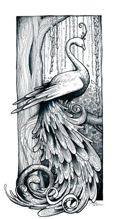 Peacock Drawings | Peacock Line Drawing