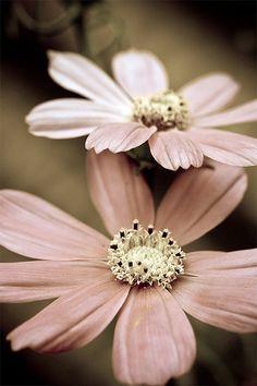 Velvet Petals <3