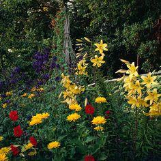 singl shade, flower garden, zinnia, stick, dahlia