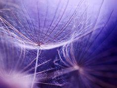 luv purpl, color purpl, purple, art, purpl power, purpl passion