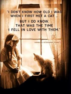Cats: My heart has and always will belong to my cat. I don't know how old I was when I first met a cat ... But I do know that was the time I fell in love with them. cat
