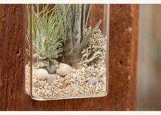 wall vase tillandsia kit