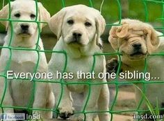 That one sibling is me. Because my sister only has one...