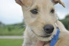 Cecil is an adoptable Terrier Dog in Indiana, PA.  ...