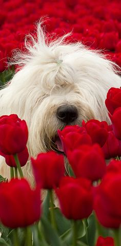 red and white and green all over... #dogs #flowers