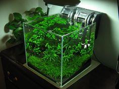 ... GARDENING on Pinterest Aquascaping, Planted Aquarium and Viva