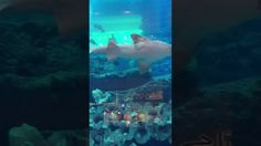 Dubai Aquarium and U