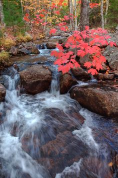 Fall Stream © Vincent James. Acadia National Park , Maine , United States