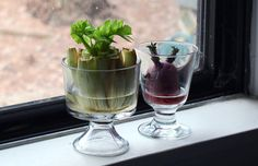 If you're still not convinced you have a green-enough thumb to try any of these, Felicia suggests this cool trick: Regrow vegetables from kitchen scraps --> http://hg.tv/pod1