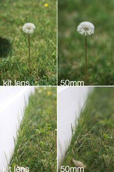 www.itsalwaysautumn.com - 8 steps to better photos on AUTO {step 8: why you need a 50mm lens}