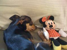 napping with Minnie