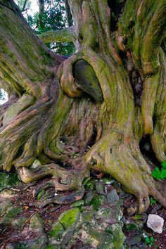 artists, mothers, nouveau art, twisti tree, trees, mother nature, art nouveau