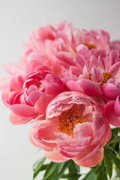 plant, rose, pink flowers, wedding bouquets, wedding flowers, beauti, accent colors, bridesmaid bouquets, pink peonies