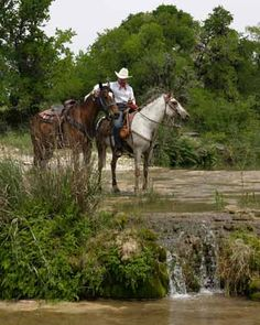 hill country texas state parks - Bing Images