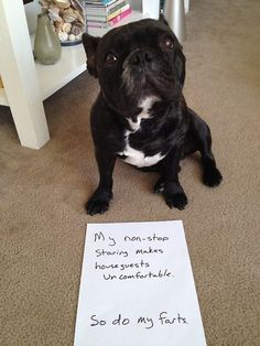 """My non-stop staring makes houseguests uncomfortable... so do my farts."" animals shaming"