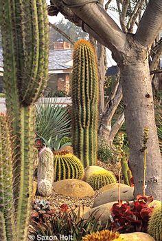 succulents and cacti /cactus