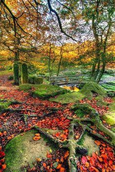 Autumn Bridge, Derbyshire, England.       صورة رائعة للخريف في انجلترا !!