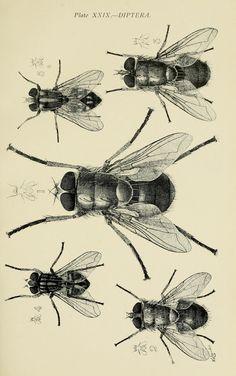 Australian insects.  Sydney,W. Brooks[1907].  Biodiversitylibrary. Biodivlibrary. BHL. Biodiversity Heritage Library.