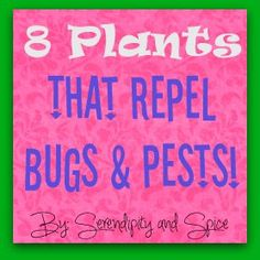 Serendipity and Spice: 8 Plants to Repel Bugs, Insects, and Pests // Must read & send to the in-laws!