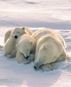 Mom & cubs take an afternoon nap • http://www.worldbook.com/activity-sheets/itemlist/user/5788-jenniferparello#