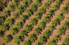 Palm Trees @ Mazatlan    by Ricardo Gómez Garrido