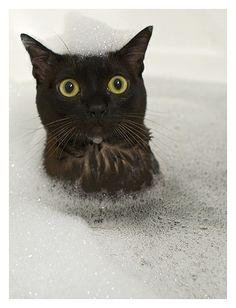 """WHY?!""  Kitty in bath."
