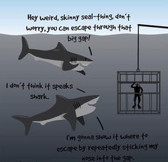 aww poor sharks