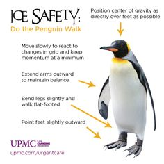 Walking in a winter wonderland? Take some tips from an expert -- walk like a penguin and prevent slip-and-fall injuries - How to walk safely on ice