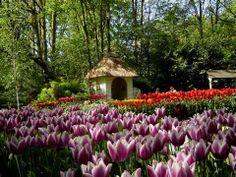 keukenhof gardens - Yahoo Image Search Results